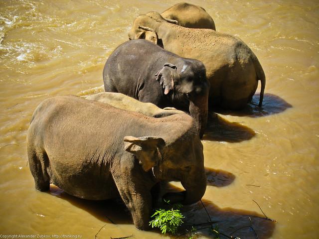 Цветный слоны