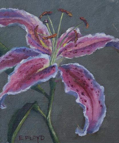 20110116 oriental lily 6x5