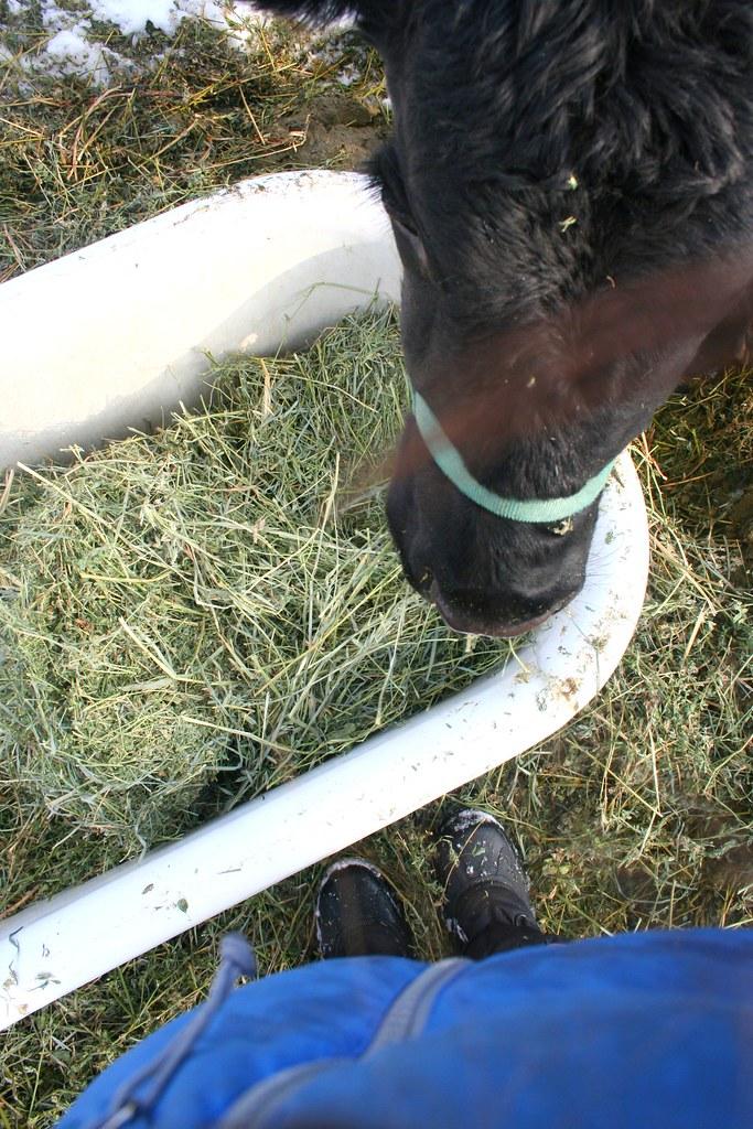 Feeding Daisy