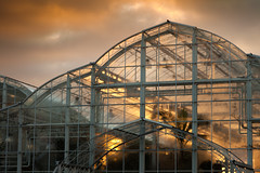 Greenhouse Effect, Wisley (flatworldsedge) Tags: sunset cloud sun hot glass backlight surrey palm greenhouse condensation glasshouse fronds wisley hothouse rhs
