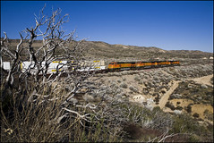 Burnt Bush and Train on Track 2 (K-Szok-Photography) Tags: california railroad canon outdoors socal transportation locomotive canon5d ge canondslr 2470l bnsf locomotives cajon inlandempire cajonpass adifferentpointofview sbcusa alltypesoftransport kenszok cajona