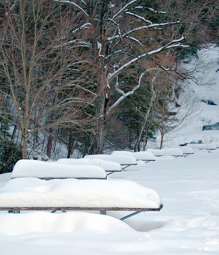 Snow-Covered Picnic Tables