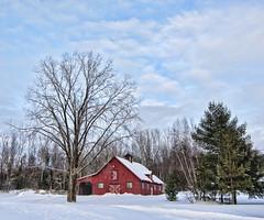 L'curie rouge (monilague) Tags: red sky cloud snow nature pine barn landscape rouge nikon pin day hangar bleu ciel qubec neige nuage arbre grange ree ironhill brome curie conifre missisquoi bromemissisquoi
