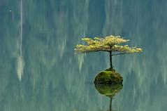 1101_0952 The smallest Island (wild prairie man) Tags: wild lake canada tree nature water forest reflections landscape bc britishcolumbia vancouverisland fairylake tinyisland nearportrenfrew