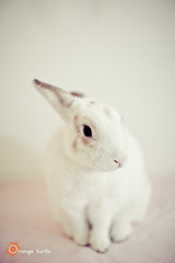 CYN-June-019 (Cindy {orange turtle photography}) Tags: white cute rabbit bunny june broccoli