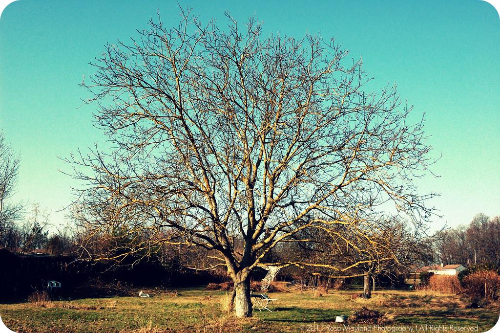 Tree sunny  1.1 bis