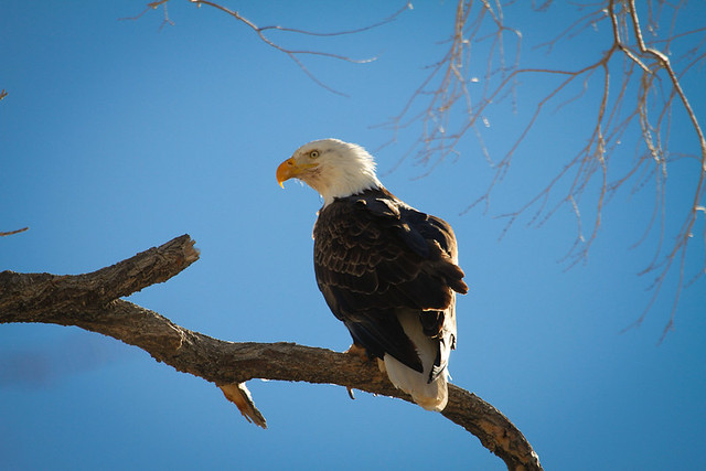Bryce National Park-4.jpg