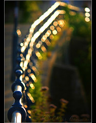 Catch......Light. (Chrisconphoto) Tags: light sunset fence focus warm bokeh chrisconway hff fencefriday