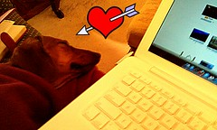 Happy Valentine's Day from Me & my Flickr Buddy! (smilla4) Tags: dog laptop canine dachshund cooper valentinesday flickring twittering colddogsinmaine