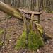 Fallen Tree Stump with Moss
