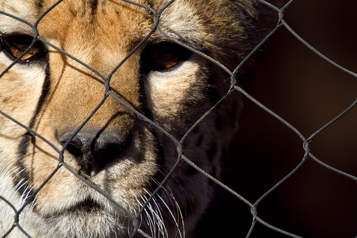 020611_zoo_animal12