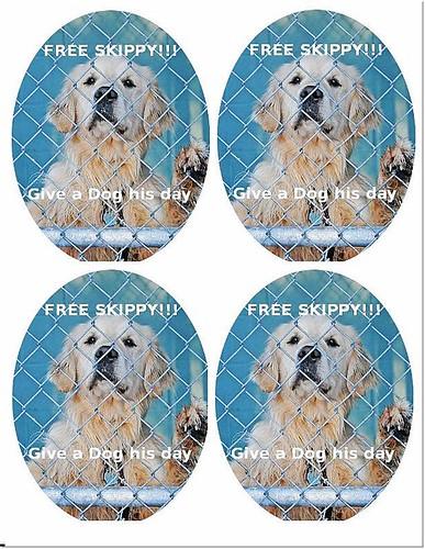 「搶救」美國麻省麻薩諸塞州,被指控咬飼主小孩無法辯駁的黃金獵犬Skippy,需要大家幫忙寫信解救,謝謝您,20110221