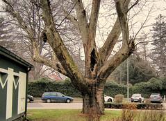~~ City Tree ~~