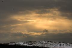 **Sunbeams** (**klaracolor**) Tags: winter sunset cloud snow holland bird reed nature birds clouds landscape frozen dune nederland thenetherlands whitesnow noordholland northholland klaracolor