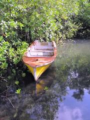 Rowing boat in mangrove swamp, Mahe island, Seychelles (wrightrkuk) Tags: trees islands indianocean mangrove swamps tropicalislands seychelles mangroves tropics archipelago marshes mahe britishcommonwealth archipelagos mangrovetrees indianoceanislands maheisland mangroveswamps anseauxpins tropicalswamps