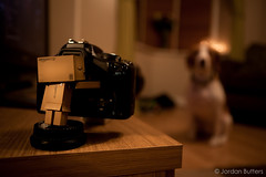 Day #52 (Jordan Butters) Tags: dog beagle pose toy photography robot photo model amazon cardboard subject collect tiptoe collectable danbo amazoncojp 2470f28l 70200f28l revoltech 450d danboard