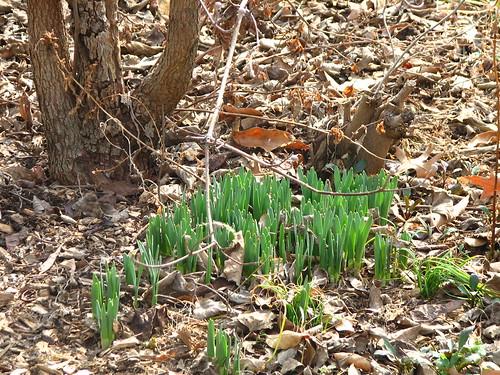 spring, I love you!