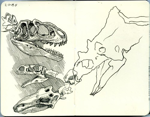 skulls at dinosaur quest