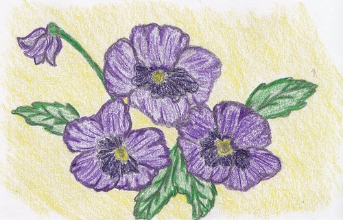 66/365 - Purple Pansies