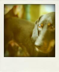 retro-hound