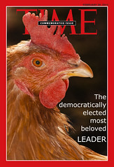 Pitfalls (bianco_mauro) Tags: chicken gallo democracy time president cover leader pollo hen commemorative elezioni gallina timemagazine subvertising elected democrazia commemorazione