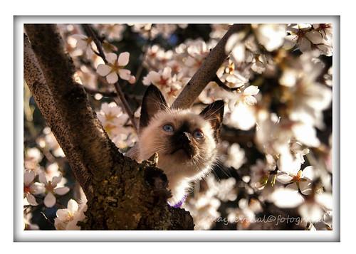 Llega la primavera