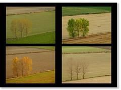 Cuatricroma castellana (__Blanca__) Tags: primavera verano campo otoo invierno castilla palencia estaciones cerrato cuatricroma valledecerrato