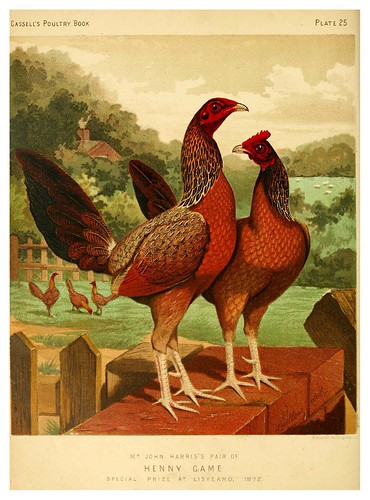 004-The illustrated book of poultry. With practical scheduals…1873-Lewis Wright
