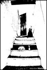 Escondite! El gato! (Eddy Allart) Tags: art puerta marisa gato poes escaleras tekening eddyallart