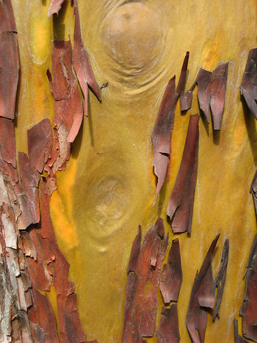 Mayne flora & fauna 2011