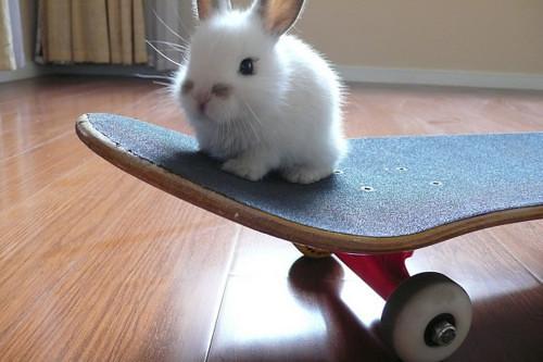 bunnyshred