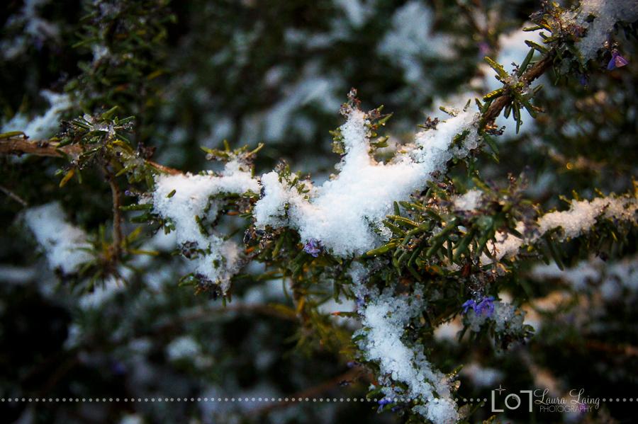 snow2011-4