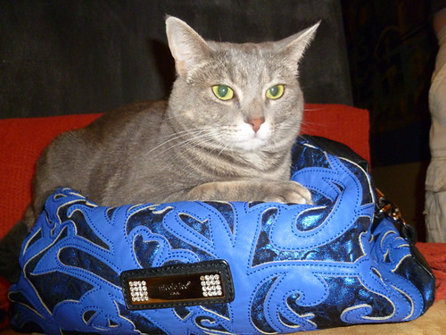 persy on a purse