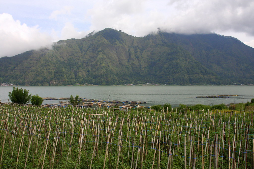 View across fields and the lake to Gunung Batur, Bali