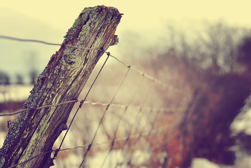 344/365 Fenced Friday by Tina M89