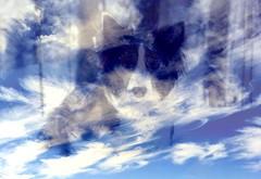 My sweet tiny alien, Rilla, 2.9.2008-9.3.2011 (belissah) Tags: sky dog last death collie heaven bea ghost border journey bordercollie goodbye iphone matka pilvi koira taivas rilla snellman aave kuolema viimeinen kummitus haamu belissah