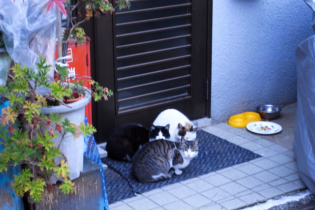 Today's Cat@2011-03-13