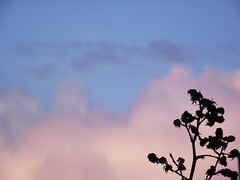Dark plant on sky (et_in_arcadia_ego) Tags: pink blue trees light sky plants cloud plant tree nature clouds contrast dark pretty branch outdoor branches lilac ethereal azur