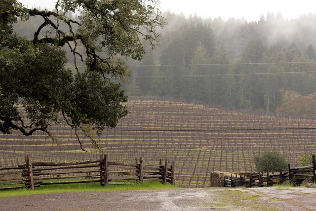 vineyards at jack london state park