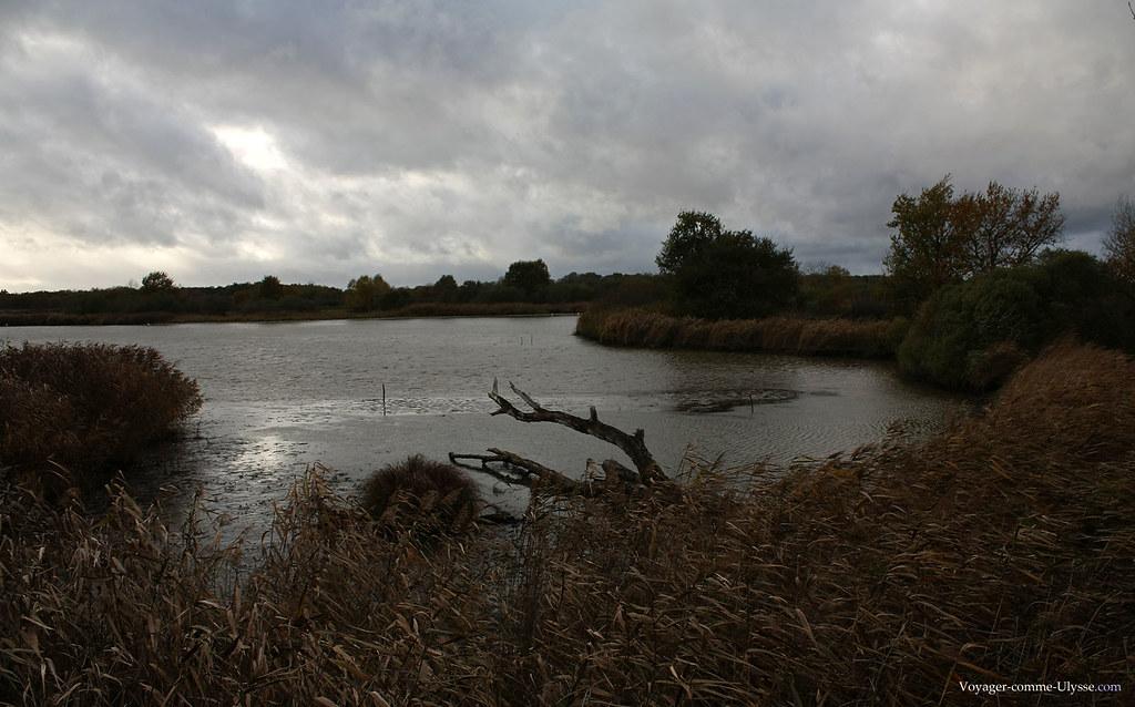 A l'abri dans un des points d'observation, on peut observer sans déranger les oiseaux de l'étang