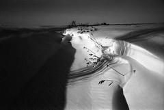 snowpack (Foide) Tags: shadow bw snow film analog kontrast yashica snowpack silvertone100 35cc autaut söderfjärden