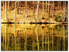 Tree Reflections (Habub3) Tags: park travel autumn light lake holiday plant flower reflection tree nature leaves yellow forest canon reflections germany landscape deutschland gold see spring flora europa spiegel urlaub laub natur pflanze powershot gelb landschaft wald bltter baum vacance reise frhling reflexionen g12 spiegelungen 2011 adelberg habub3 mygearandme