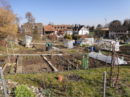 21.Mar.11 The Garden Allotment