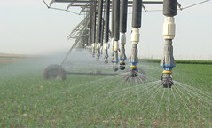 New Ogallala Aquifer study looks at economics, groundwater use of bioenergy feedstocks