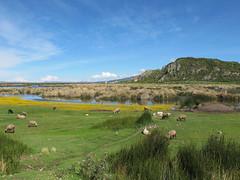 IMG_4032 (Four Seasons Garden) Tags: lake peru titicaca marie garden four seasons picture tony newton walsall