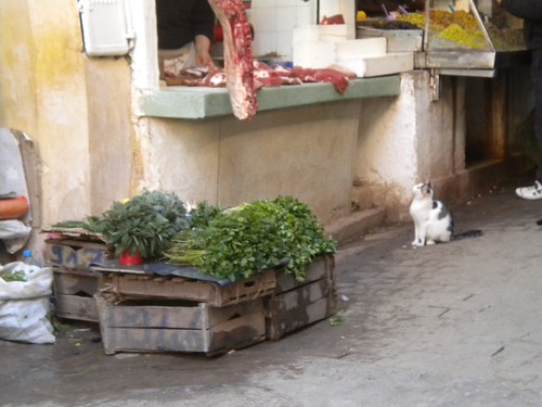 1cat in morocco marilyn berg cooper