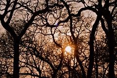 Nagarhole national park (LaylaLee) Tags: park india national gandhi karnataka rajiv