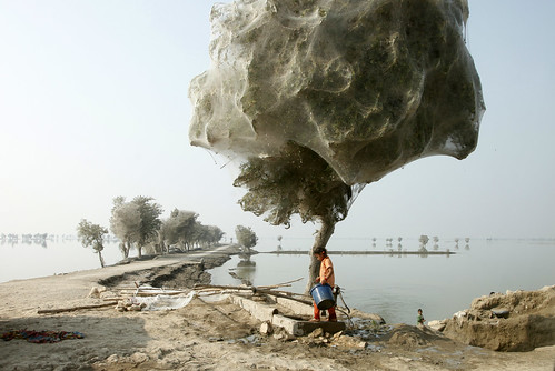 Trees cocooned in spiders webs after flooding in Sindh, Pakistan by DFID - UK Department for International Development