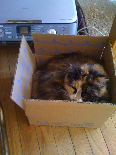 cat! in Box! by unglaubliche caitlin