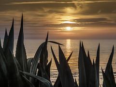 2713-2016-BR (elfer) Tags: puestasdesol contraluz agua mar pitas paisaje